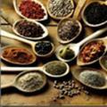 Condimentos más usados en la industria alimenticia