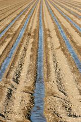 campo-de-cultivo.jpg