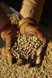 280 mdd en ayuda a pequeños productos de granos argentinos