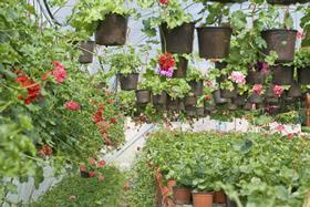 flores-y-plantas.jpg