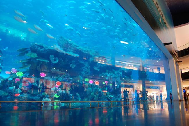 dubai aquarium and discovery centre