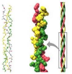 Como se hace el colageno hidrolizado